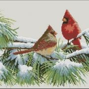 Dimensions 35178 Winter cardinals